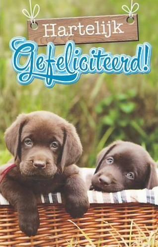 gefeliciteerd dieren Honden | Keeskaart.nl gefeliciteerd dieren